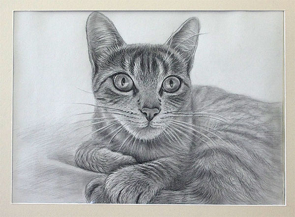katzen zum malen  malvorlagen gratis