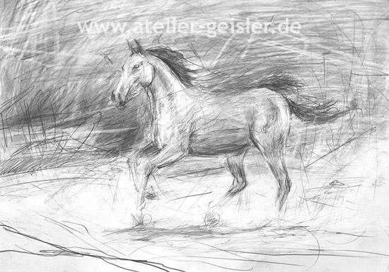 Pferdeportraits Pferdeportrait Pferde Gemalde Pferde Zeichnungen